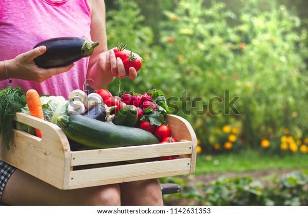Woman Wooden Crate Full Vegetables Garden Stock Photo Edit Now