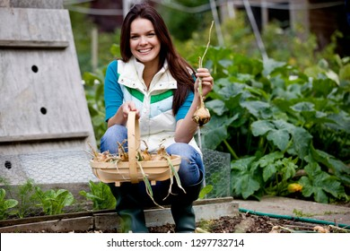 Woman with wooden trug picking onions on garden allotment smiling at camera