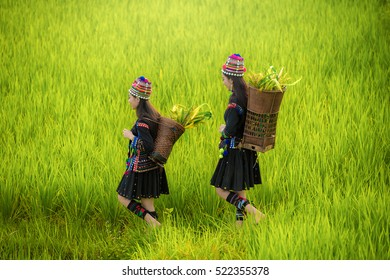 Woman worker in farmer suit on fields, Asian