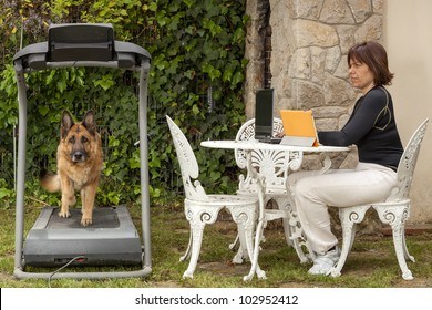 woman working at a computer while your dog is trained on the treadmill