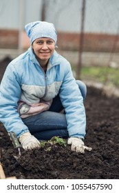 woman is working in the garden to plant strawberries