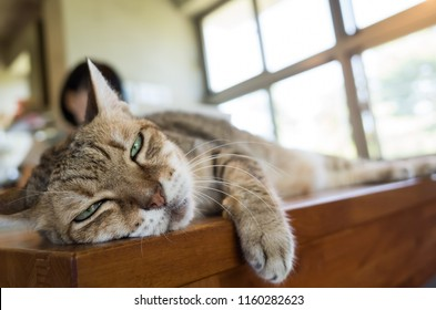 woman working at home with her cat lying on table