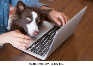 A woman working on her computer at on a wooden table with her dog looking at the screen of her laptop really interested