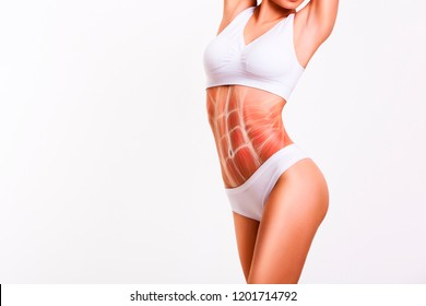Woman's abs muscle and body structure. Female slender body in underwear.