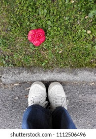 Woman's feet standing in front of a red Camellia flower lying on the grass in spring