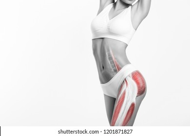 Woman's gluteus muscle and body structure. Human body frontal view isolated on white background. Female body in underwear.
