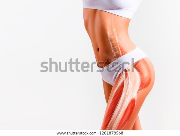 Foto De Stock Sobre Músculo Glúteo De La Mujer Y Editar