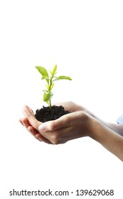 Woman's hand cupped around a growing plant . Isolated on white background.