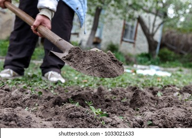 A woman's hand digs soil and soil with a shovel. Close-up, Concept of gardening, gardening.
