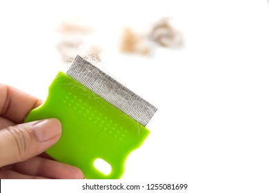 Woman's hand holding comb pet brush with cat fur clump or tuft wool after grooming with group of cat fur clump blurred background