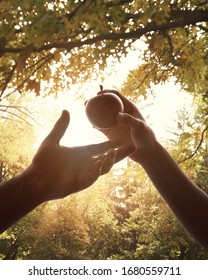 A woman's hand is holding the forbidden fruit of an apple to and tempting Adam in the garden of Eden for the christian story of Adam and eve in the Bible.