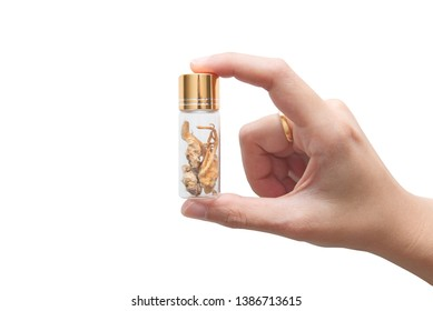 Woman's hand holding glass bottle of golden yellow natural cordyceps sinensis, to use as medicine or supplementary food isolated on white