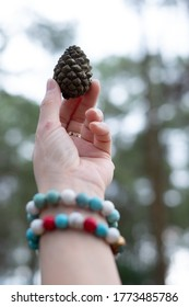 Woman's hand holding pinecone amid pine forest. Nature lover like taking picture of pinecone / pinecones when trekking. Hand holding pinecones is symbol of nature lover. Eco friendly travel concept.