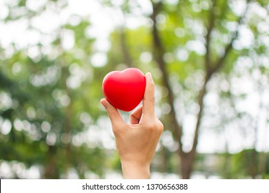woman's hand holding red heart . selective focus.