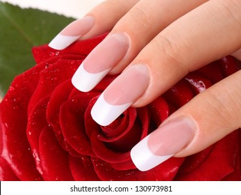Woman's hand holding rose.