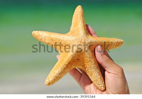 womans-hand-holding-starfish-600w-393915