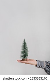 Woman's hand holds a small pine tree on her palm. Holiday conception.