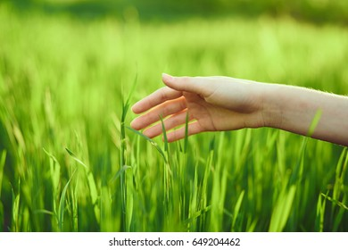 Woman's hand on the grass