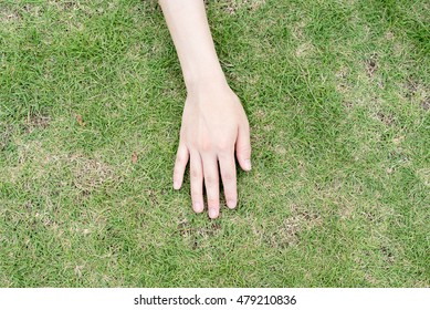 Woman's hand on the green field