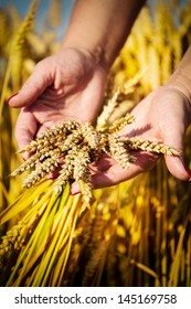 Woman's hand touch wheat