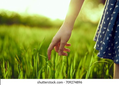 the woman's hand touches the grass