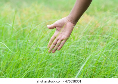 woman's hand touching the grass, soft focus