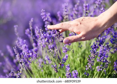 woman's hand touching lavender, feeling nature