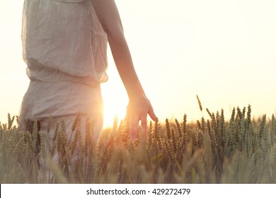 woman's hand touching wheat ears at sunset