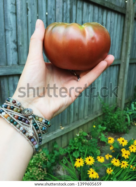 A woman's hand wearing a wrap bracelet proudly holds up a Black Krim tomato that she grew in her back yard.
