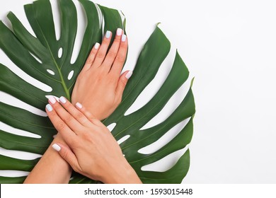 Woman's hands with beautiful manicure with pastel color nailpolish lying on monstera leaves, top view