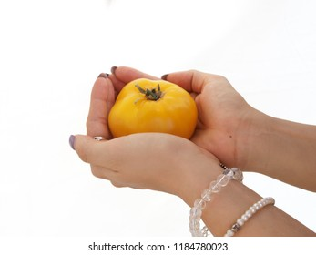 Woman's hands with bracelet, holding a yellow tomato on white isolated background.
