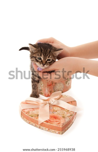 Woman's hands with cute kitten in heart-shaped box isolated on white