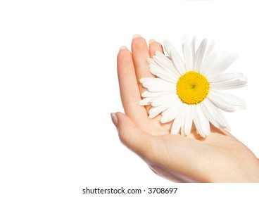 Woman's hands with a daisy isolated on white