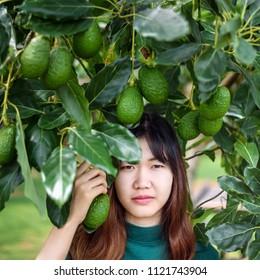 Woman's hands harvesting fresh ripe organic avocado