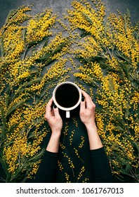 Woman's hands hold cup of coffee with yellow spring flowers mimosa on black concrete background view from above. Fashion flat lay style. Spring mood. Food art. Beautiful breakfast, top view.