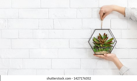 Woman's hands holding mini succulent garden in glass florarium at white brick wall background, copy space