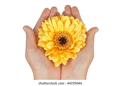 Woman's hands holding yellow flower
