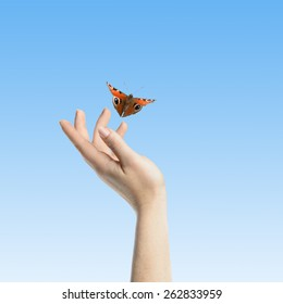 Womans hands letting the butterfly be free to go