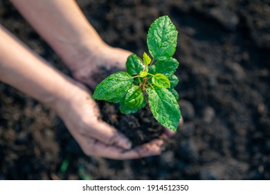 Woman's hands planting a young plant on green bokeh nature background, Save the World concept