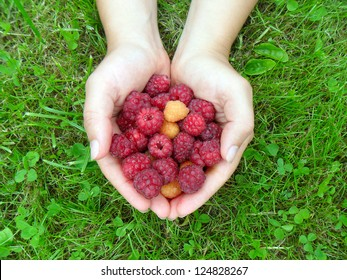 Woman's hands with a raspberry on a background of green grass
