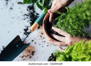 Woman's hands transplanting plant a into a new pot.