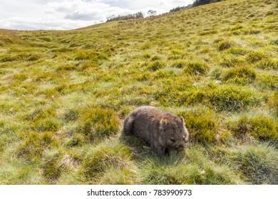 Wombat Cradle Mountain