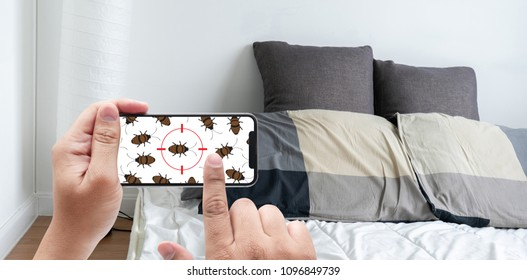 Women are checking for unusual things and detecting bed bugs in the bedroom.