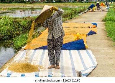 Women drying rice in Hoi An
