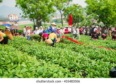Women and women from ethnic minorities are picking tea leaves on Tea's Contest  in Moc Chau highland, Son La province of the Northwestern, Vietnam on April 16, 2016.