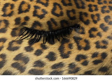 Women eye, close-up, concept of sadness, leopard pattern