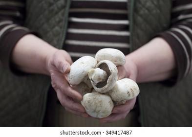 women farmer holding fresh mushrooms