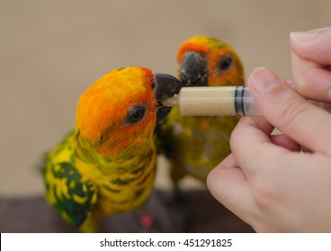 Women feeding birds through a syringe