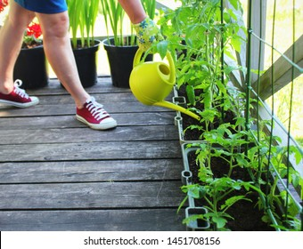Women gardener watering plants. Container vegetables gardening. Vegetable garden on a terrace. Flower, tomatoes growing in container .
