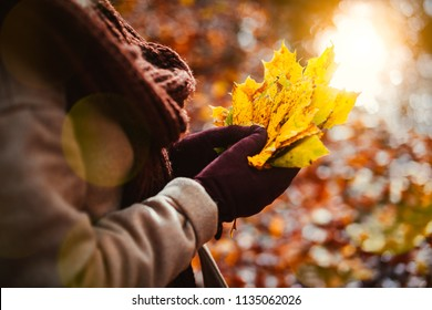 Women holds bouquet of autumn yellow maple leaves in her gloved hands. Backlit sunshine reflection with sun beams and flares in pond in background